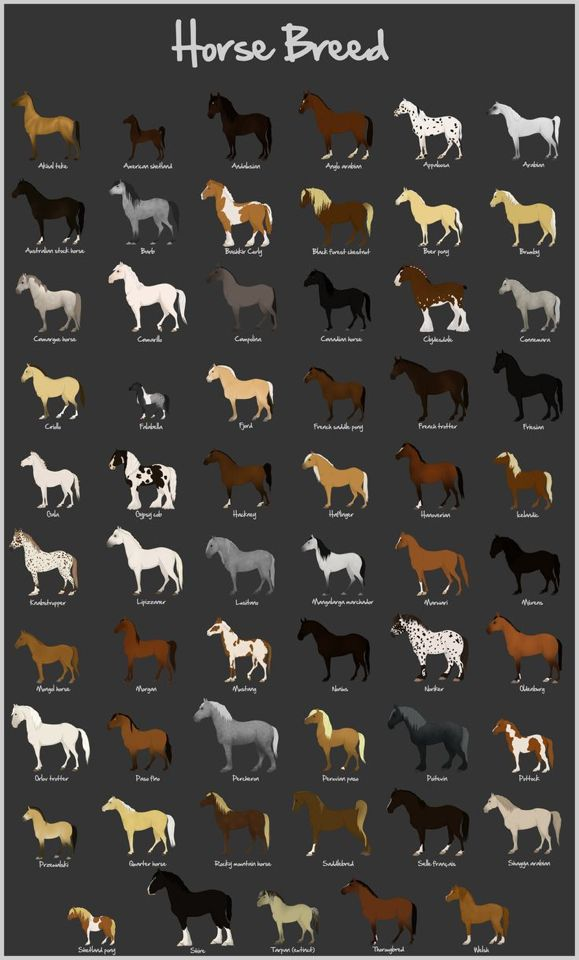 Horse breed chart