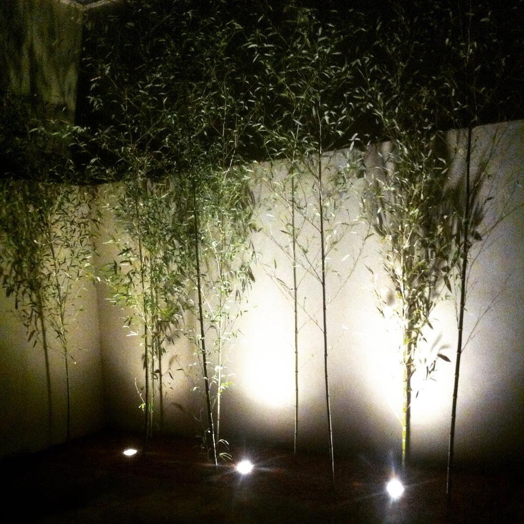 """""""À noite, outro jardim completamente diferente. Nele observamos outros pontos de destaque e conferimos novas sensações.  At night, another garden…"""""""