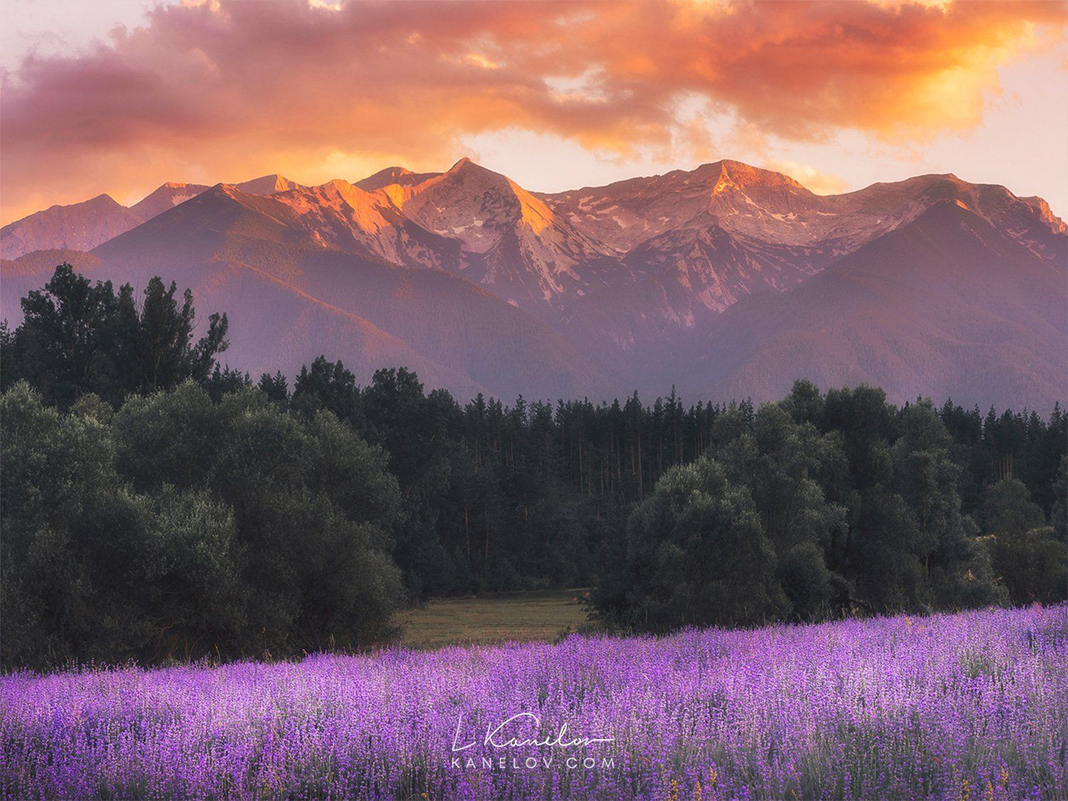 Lavender Field With Mountain In The Background Nature Landscape By Mountain Landscape Photography Landscape Photography Mountain Sunset