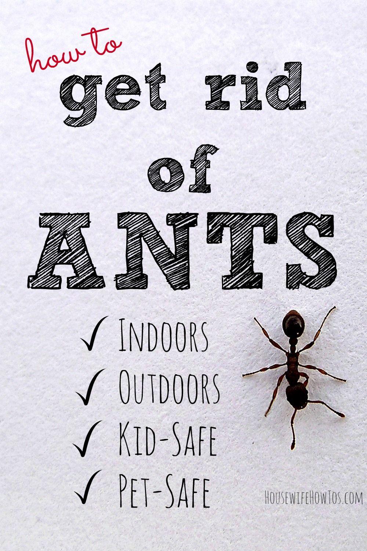 423a6aa9253a5d09f5e97ac8bcc28a66 - How To Get Rid Of Ants Safely Around Pets