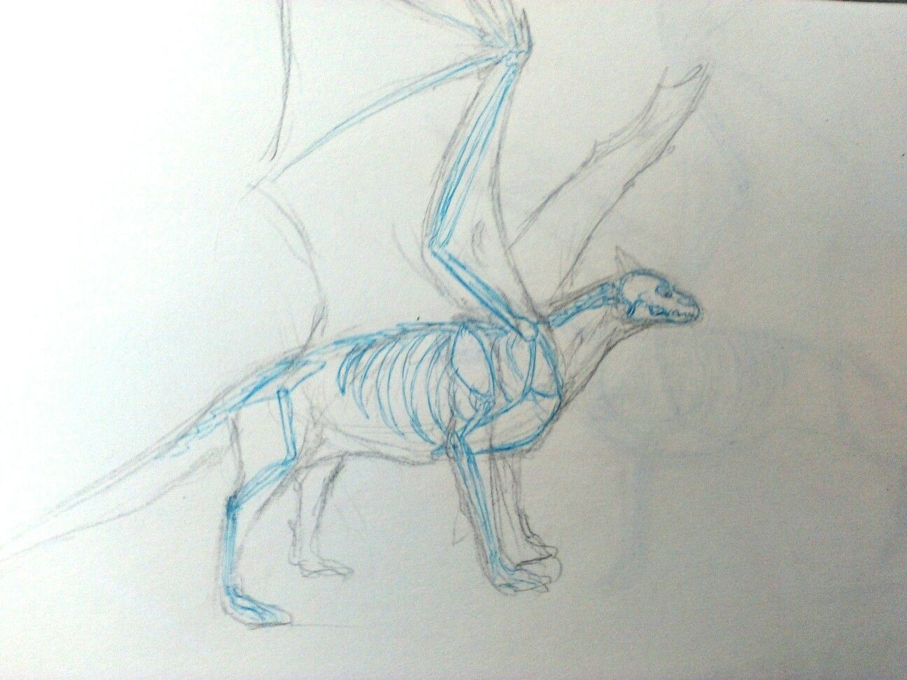Dragon anatomy! (Wings in front of forelimbs)