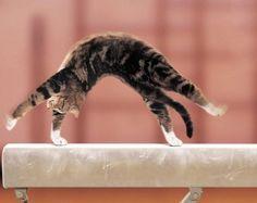 Gymnastique Meme Les Chats Font De La Gym Lol Petit Chat Mignon Animaux Humour Animaux