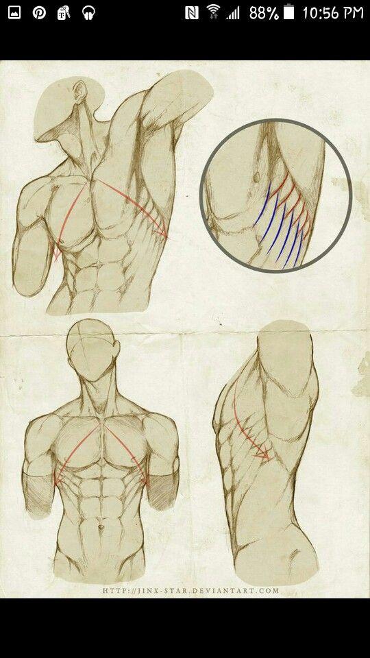 Pin von Mason auf anatomy muscle poses | Pinterest