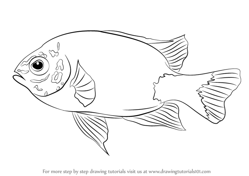 Learn How To Draw A Damselfish Fishes Step By Drawing Tutorials