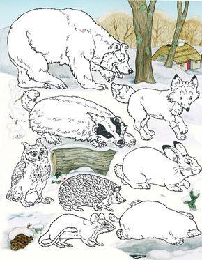 Animals From The Mitten By Jan Brett Mitten Winter Kindergarten Winter Preschool