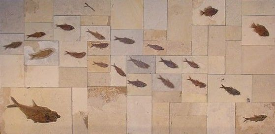 A Source For Quality Fossil Fish Tiles For Interior Design