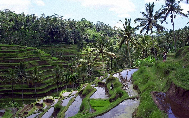 Tempat Wisata Paling Menarik Dan Terkenal Di Bali