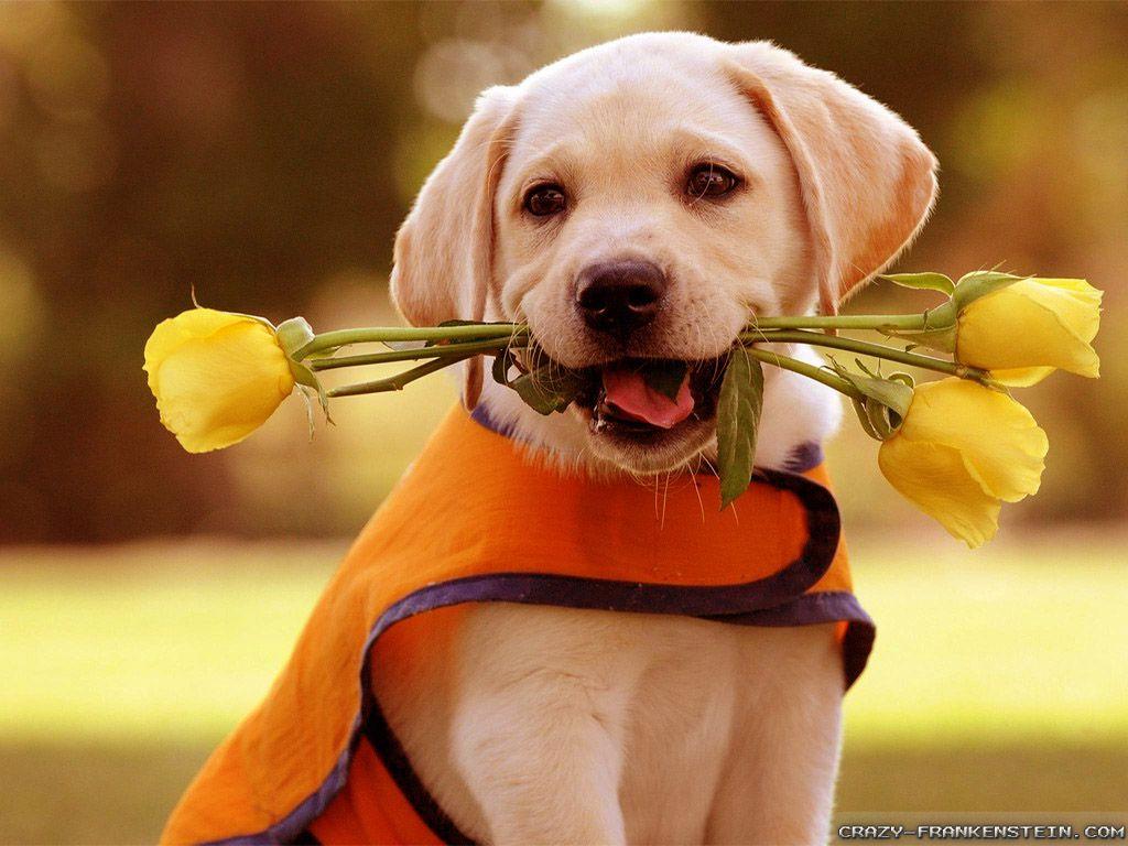 Lover Puppy