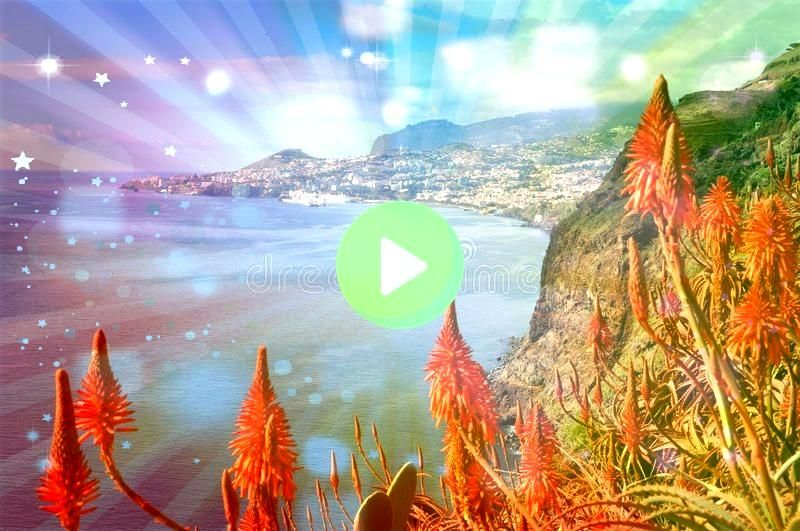 coast Funchal Overview of capital city funchal on madeira island port Madeira coast Funchal Overview of capital city funchal on madeira island port  This pink giant looks...