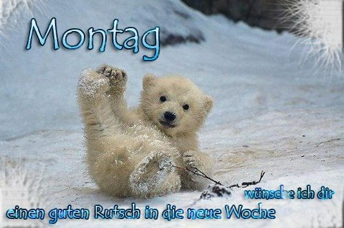 Guten Morgen Montag Baby Eisbären Süße Baby Tiere Und