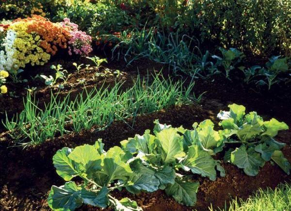 Grow Your Best Fall Garden Vegetables   MOTHER EARTH NEWS