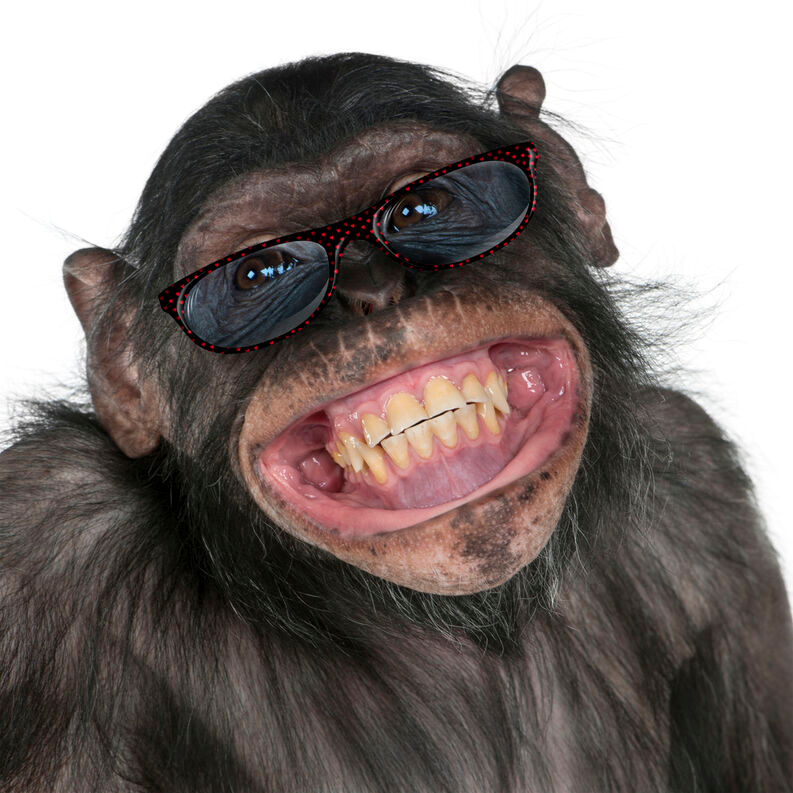 Risada Pesquisa Google Macacos Engracados Risada Corpo Humano Responda o quiz e descubra se você é uma verdadeira guinática. risada pesquisa google macacos