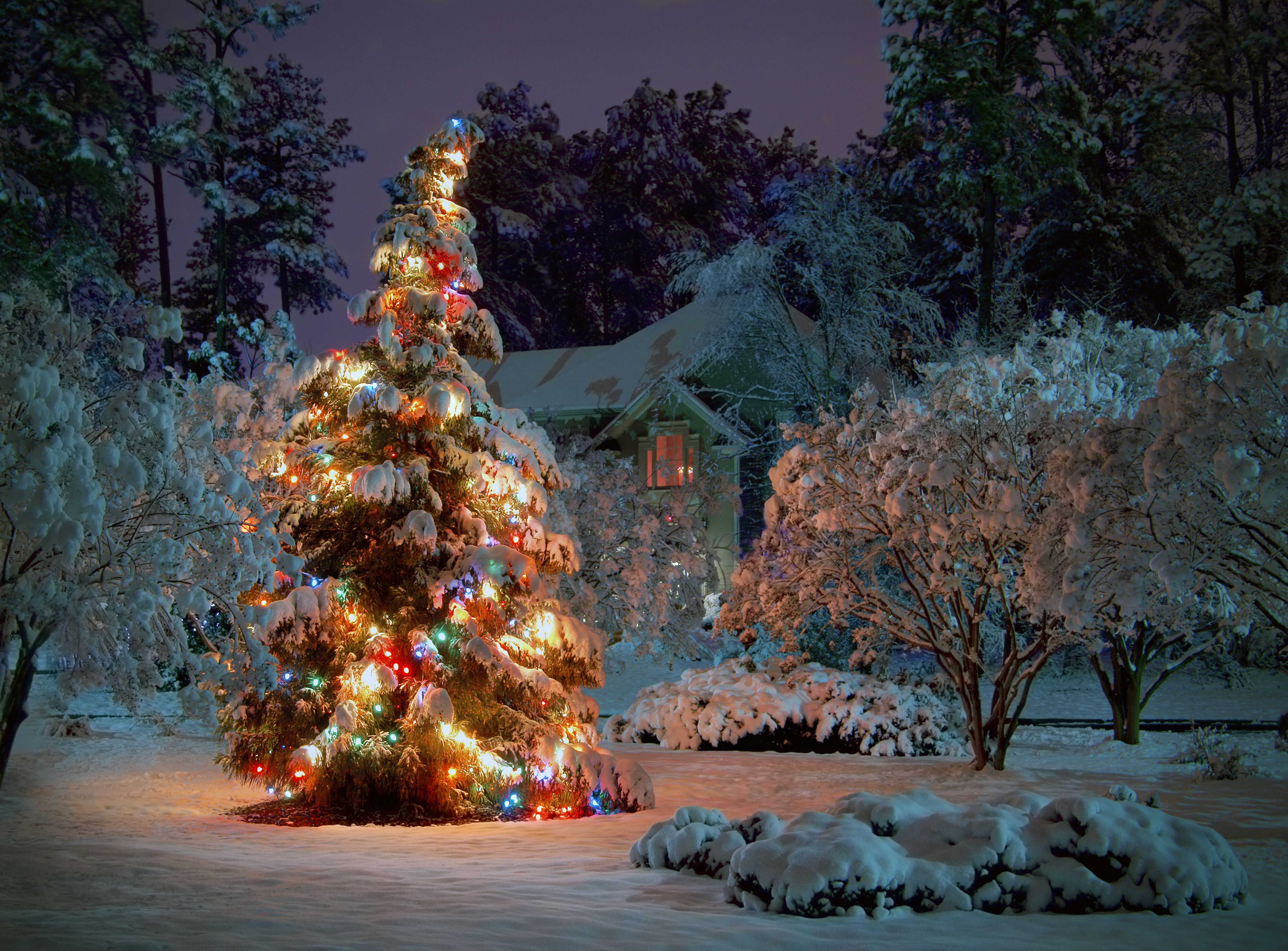 Picking A Theme For Christmas All Things Heart And Home Christmas Tree Wallpaper Outdoor Christmas Tree Beautiful Christmas Trees Decorated
