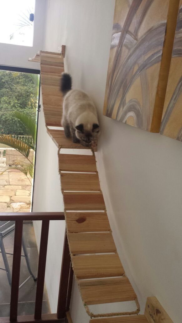 Passarela / Ponte Para Gatos - R$ 105,00 no MercadoLivre
