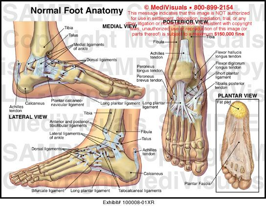 shut up | anatomy | Pinterest | Anatomy