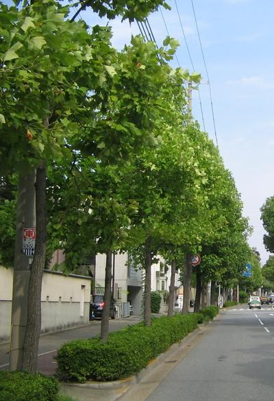 神戸市:街路樹に用いられる主な樹木