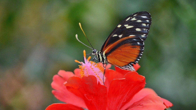 Der Schone Schmetterling Elkes Kindergeschichten Im Sommer In 2020 Geschichten Fur Kinder Kindergeschichten Schone Schmetterlinge