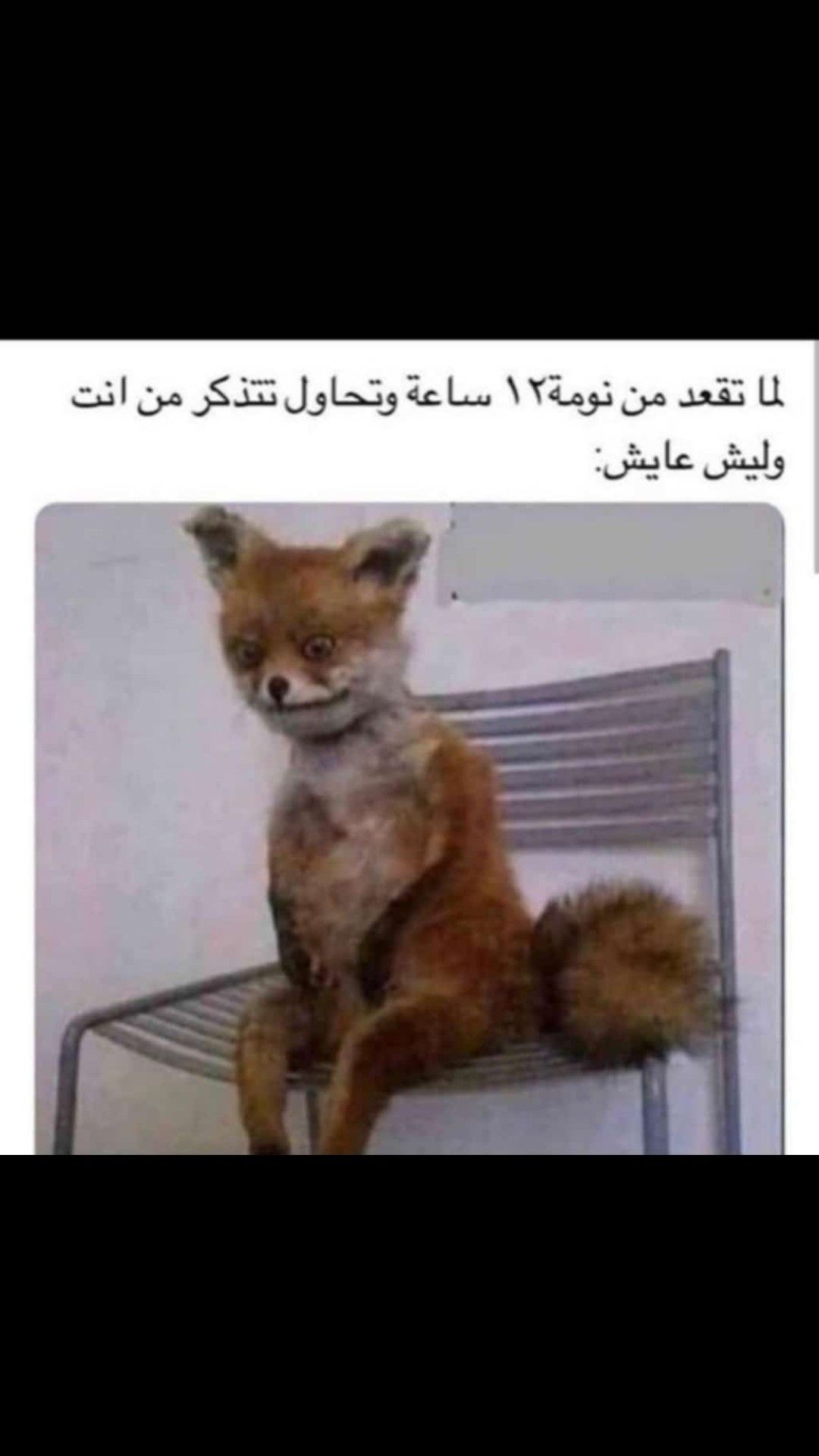 Pin By Abrar On استهبال Dora Funny Funny Picture Jokes Fun Quotes Funny