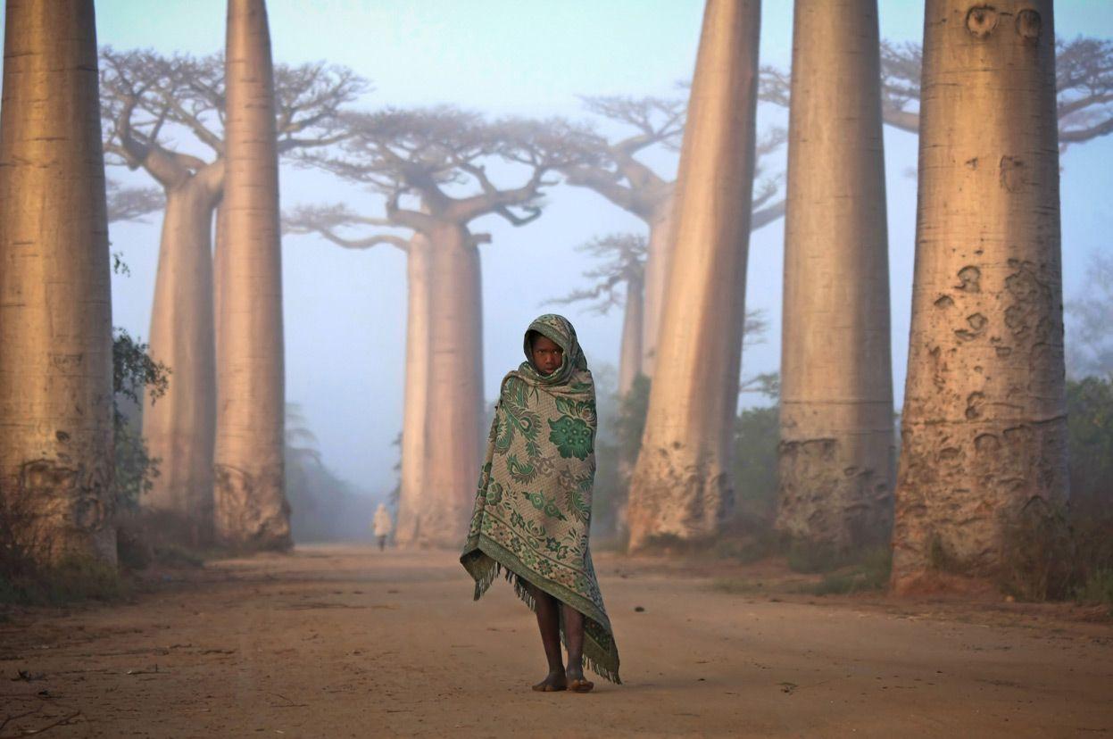 Menina malgaxe caminha entre as árvores Baobab