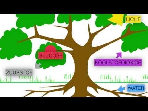 Spiksplinternieuw Fotosynthese en verbranding (eenvoudige uitleg) - YouTube (met LK-49