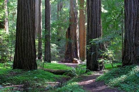 Montgomery Woods State Natural Reserve Comptche CA My Travels