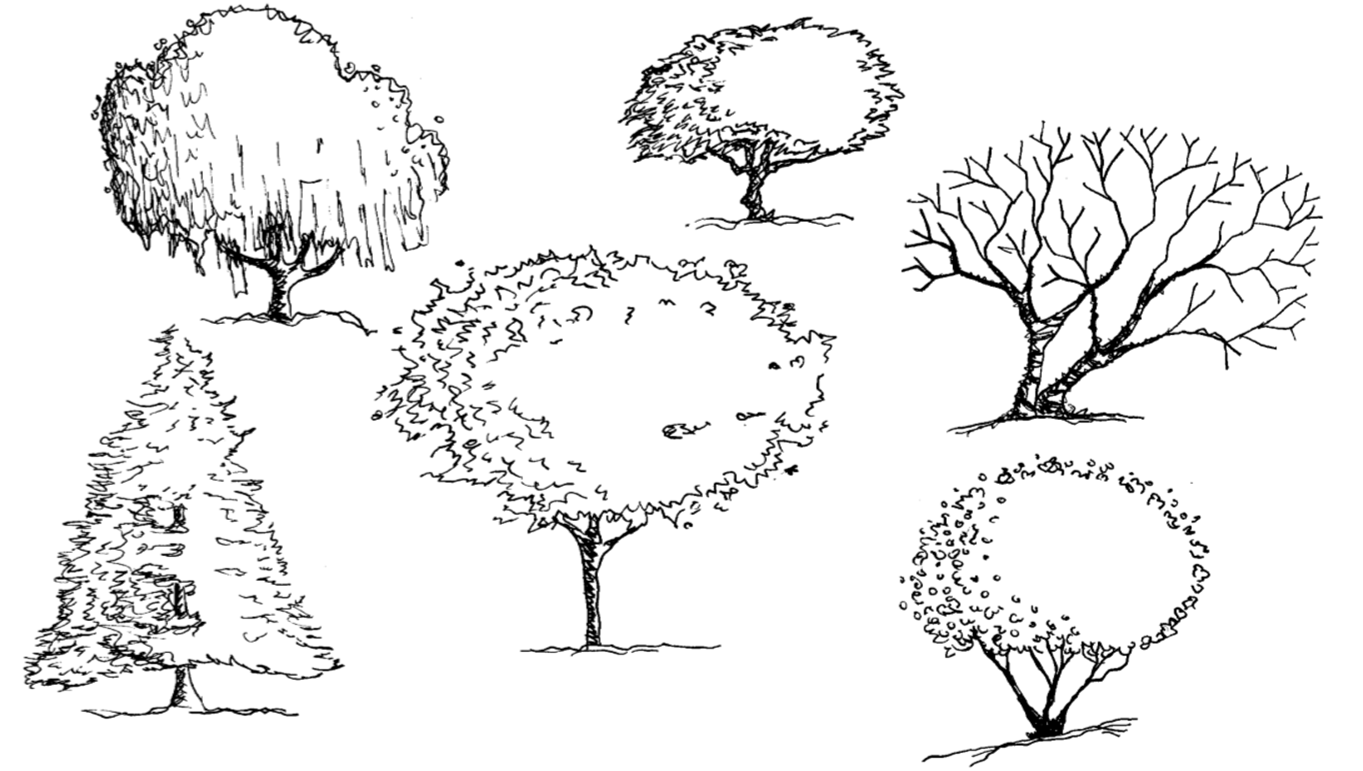 Trees In Elevation