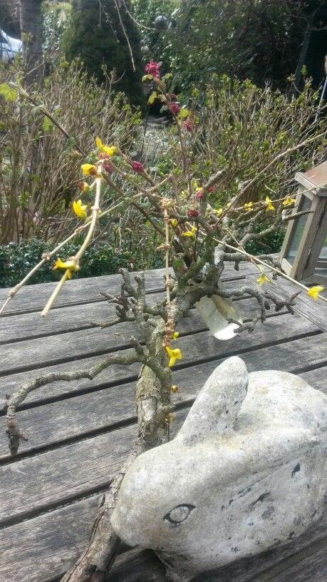 Paashaas#bloemen op de tafel bij #Theetuin aan de #Limes