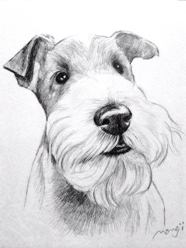 Coloriage Chien Fox.Wft Drawing Fox Terrier Art Fox Dog Wire Fox Terrier Et