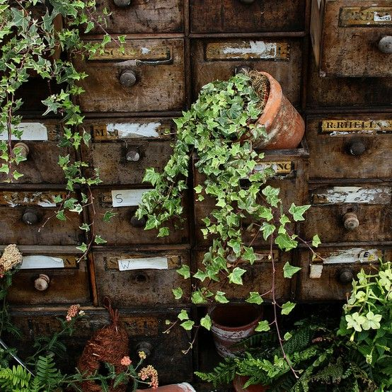 """""""Brainstorm: What to do with a Library Card Catalog? -- ...depending on the condition, you might just want to chuck it outside and let the ivy have a go at it!""""  Click through for many more pictures!"""