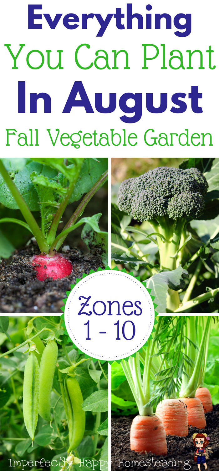 What To Plant In August For An Awesome Fall Garden Fall Garden