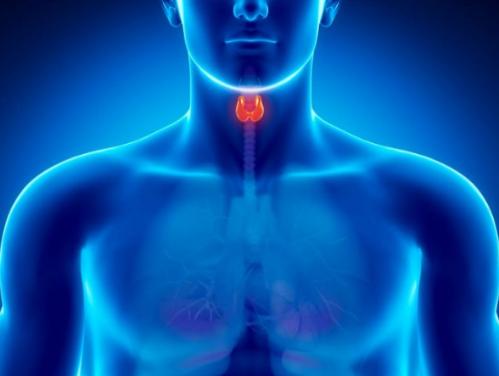 أسباب خلل الغدة الدرقية وطرق علاجها وأنواعها Radiation Detox Thyroid Thyroid Health