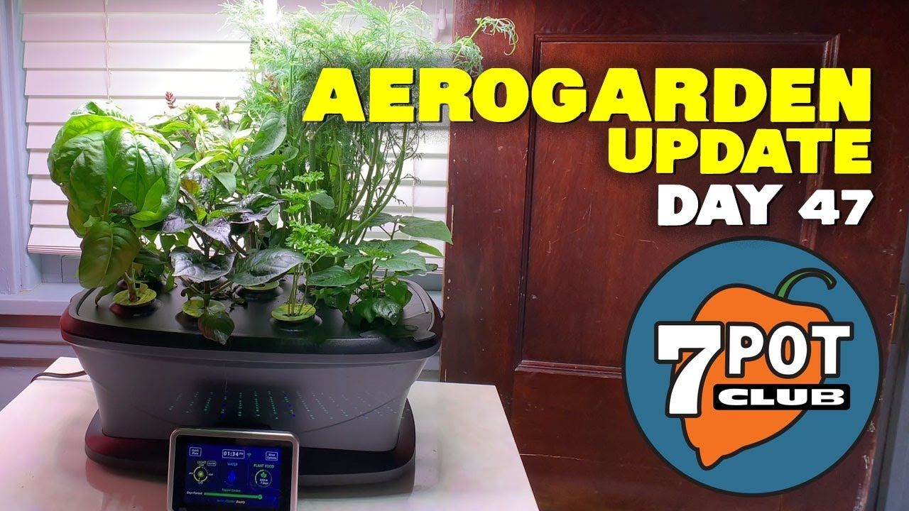 Aerogarden Pepper Growing Update – Day 47 With Images 400 x 300