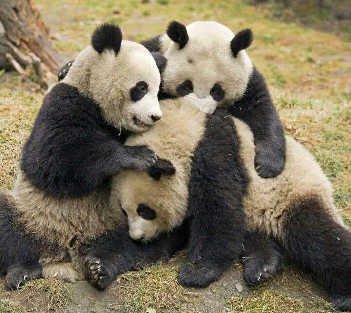 I ♥ Pandas