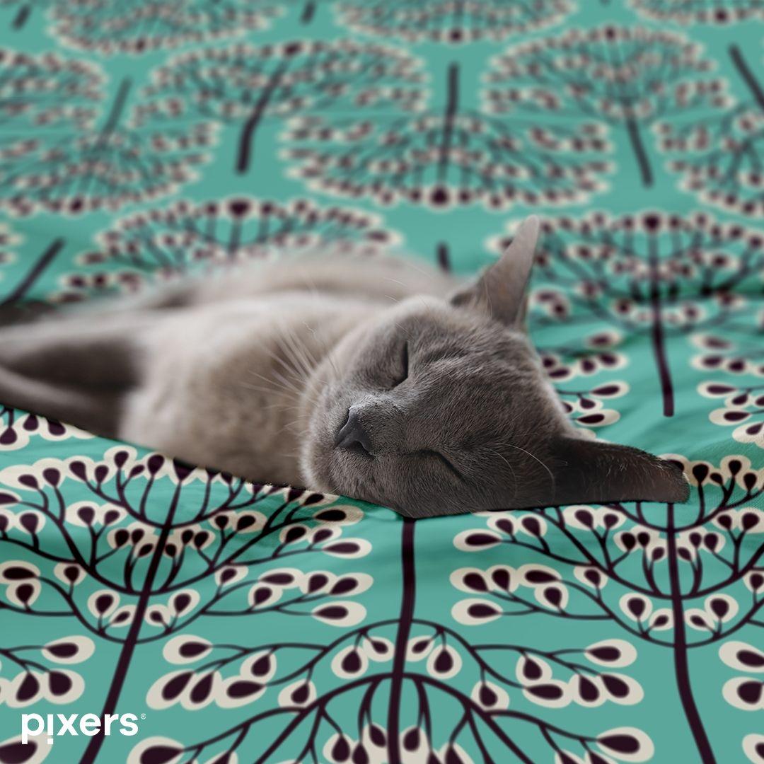 Cute Grey Tabby Kitten Mimy