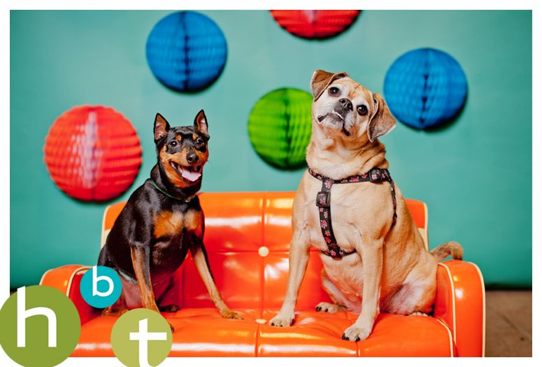 Hbt Doggy Booth At Spaw City Social Club Indoor Dog Park Grand