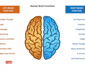 Free Brain Powerpoint Template With Left  Right Sides  Power