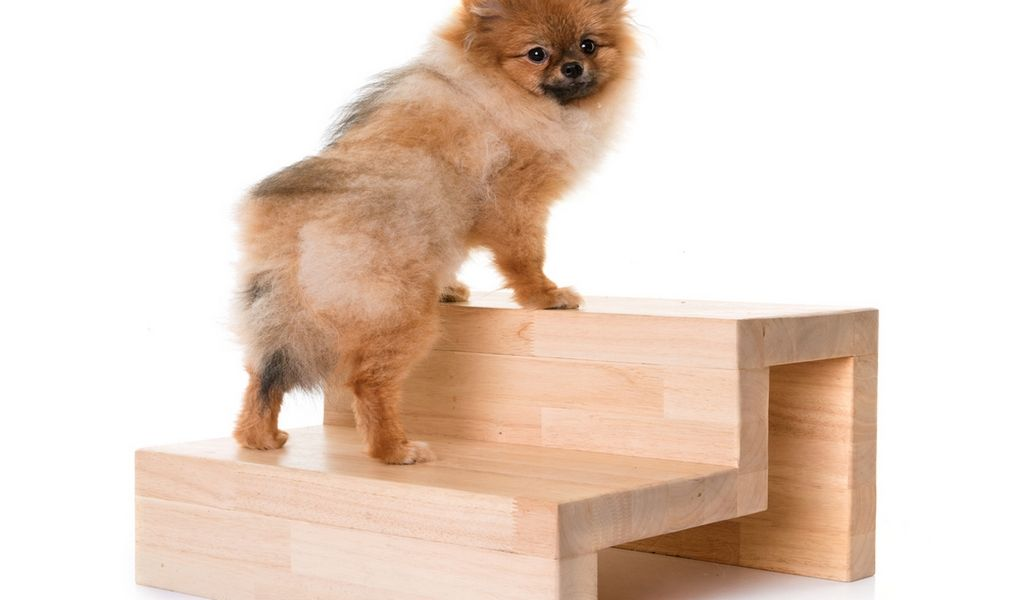 Diy dog stairs how to build your own doggy steps pet