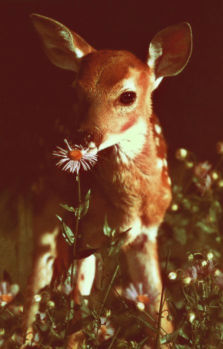I would have a deer companion in my dream farmhouse