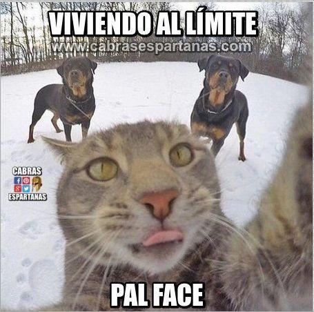 Imágenes y memes de humor
