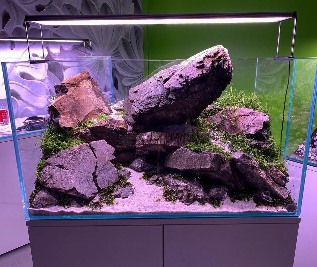 Before Filling Up The Water In 2020 Cute Baby Animals Aquascape Baby Animals
