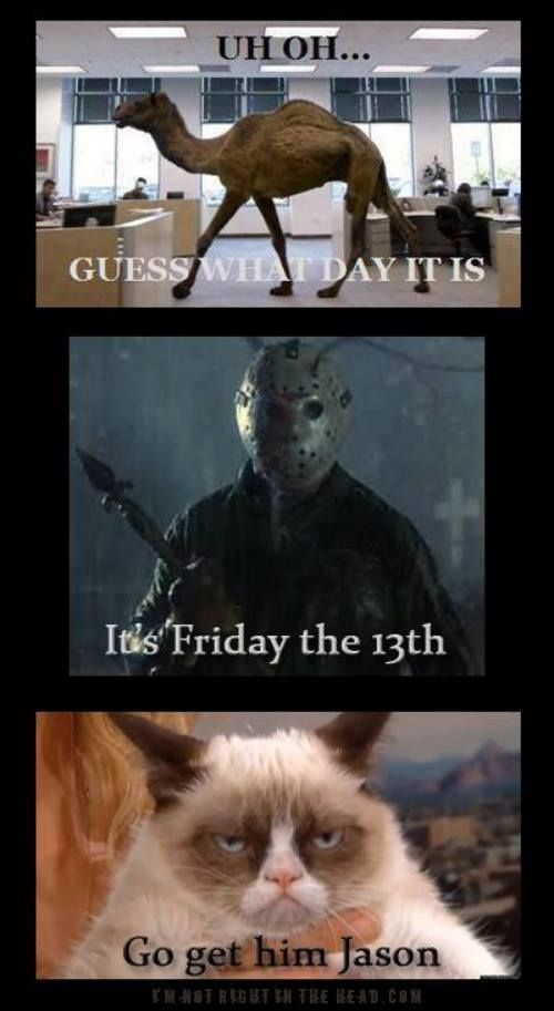 It's Friday the 13th! | Haha funny, Funny cat memes ...