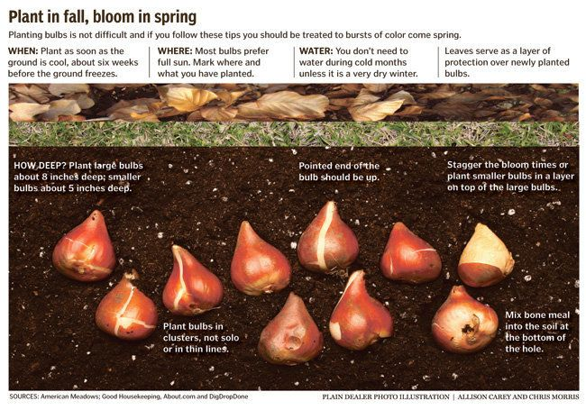guide for fall bulb planting