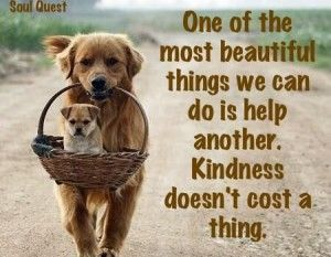 Quotes About Dogs Kindness Images Dog Quotes Wit And Wisdom