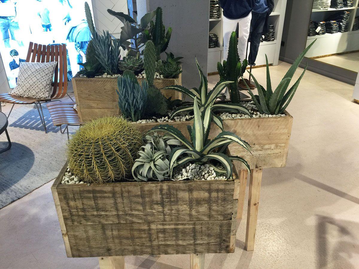 Raumteiler Hamburg dekoration mit pflanzen sukkulenten kaktus für modegeschäft in