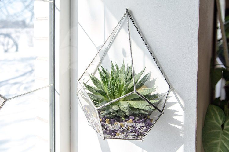 15 Hanging Succulent Planters To Turn Your Walls Into Vertical Gardens Succulent Wall Hanging Hanging Succulents Wall Terrarium