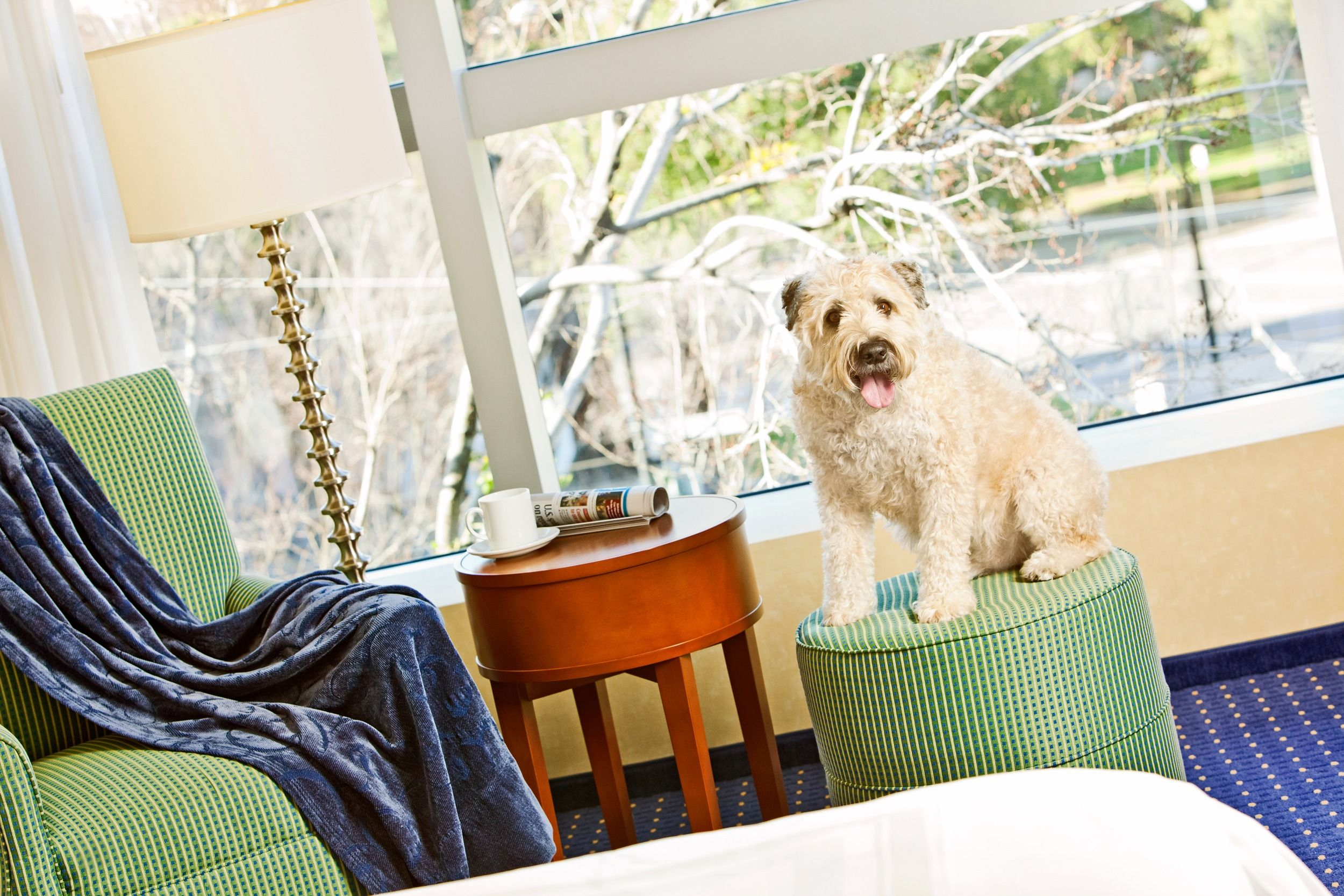 The San Jose Marriott Is A Pet Friendly Hotel Where Your Best Man Can Stay The Night Wedding With Images Pet Friendly Hotels Marriott Downtown Hotels