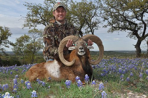 If you think you've already seen the most exotic animals in Texas, wait til you visit V-bharre, the premier hunting ranch in Texas.
