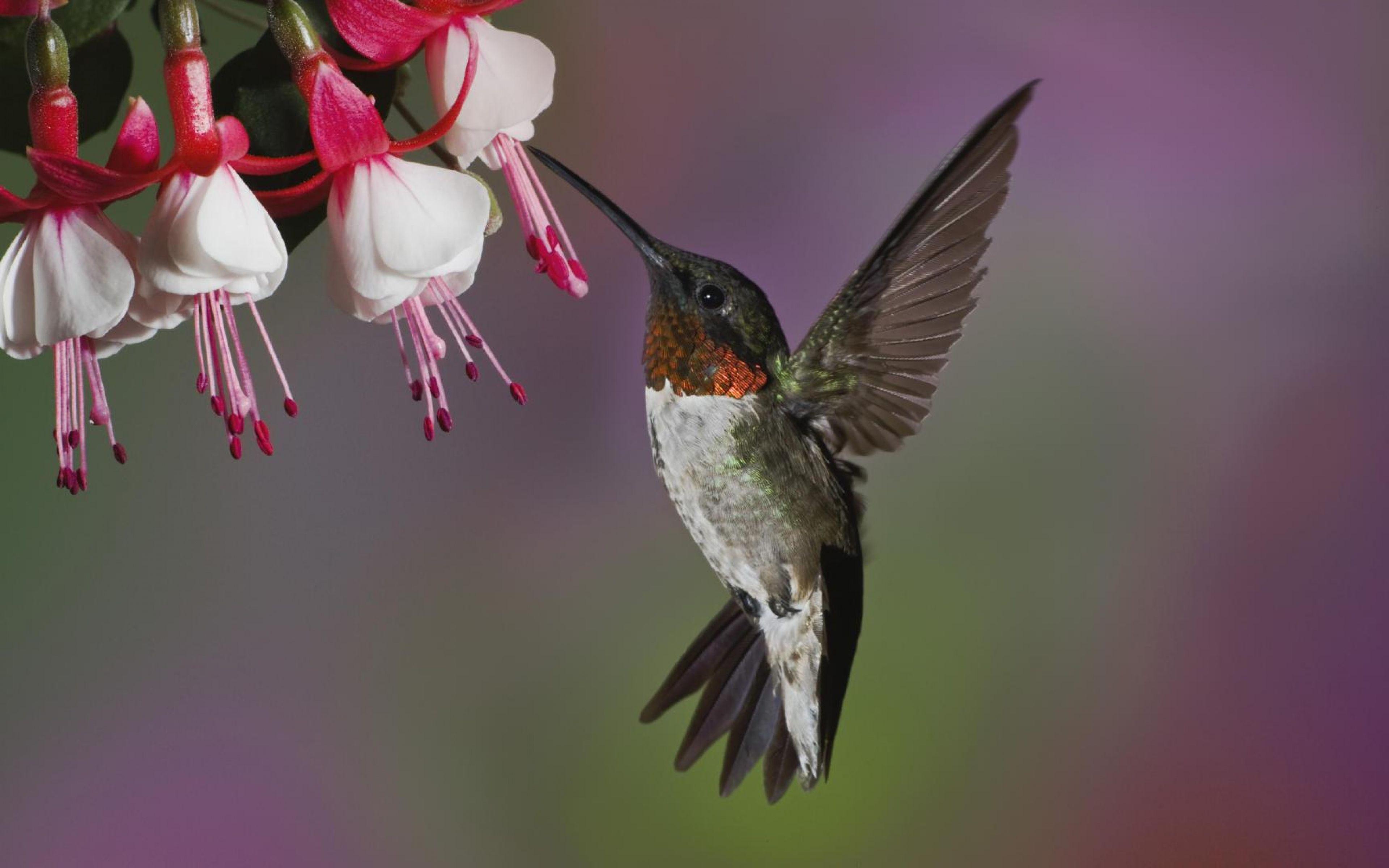 ultra hd wallpaper, flower 4k    , bird, flying, beak, flower