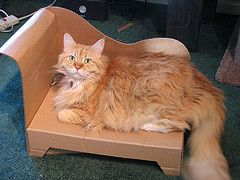 Diy Cardboard Cat Bed Oh Dear Now I Know What To Make From The