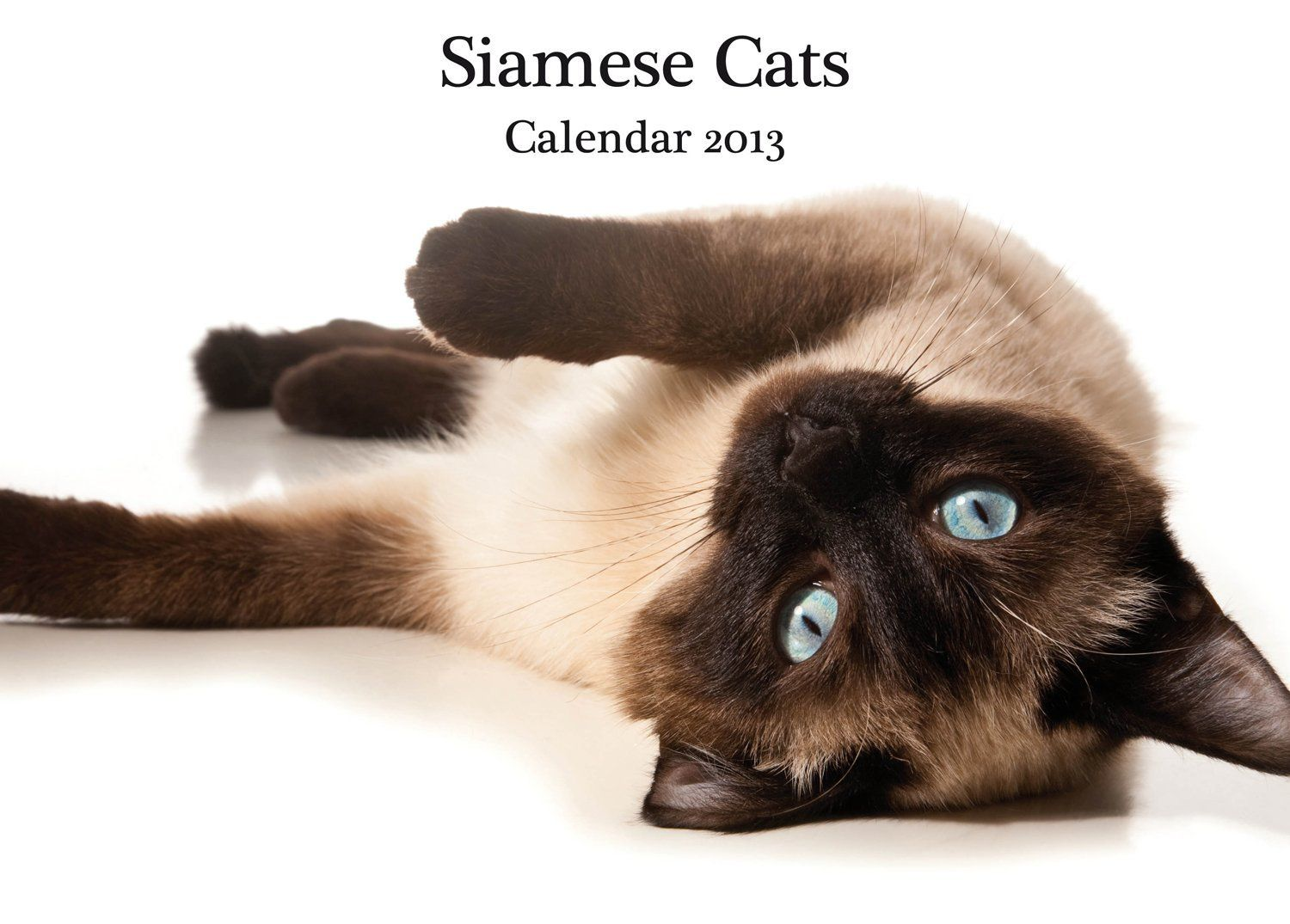 and Steel Siamese Cats A4 Wall Calendar *** Read